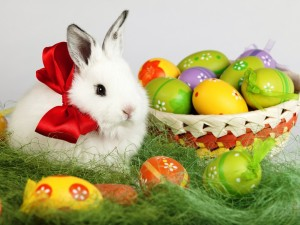 Easter Bunny with eggs weekly roundup