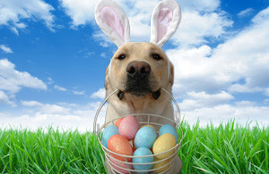 Easter Egg Hunt with family pet
