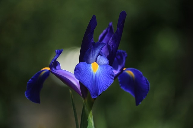 more diy melt pour spring flowers recipe the chemistry store blog. Black Bedroom Furniture Sets. Home Design Ideas