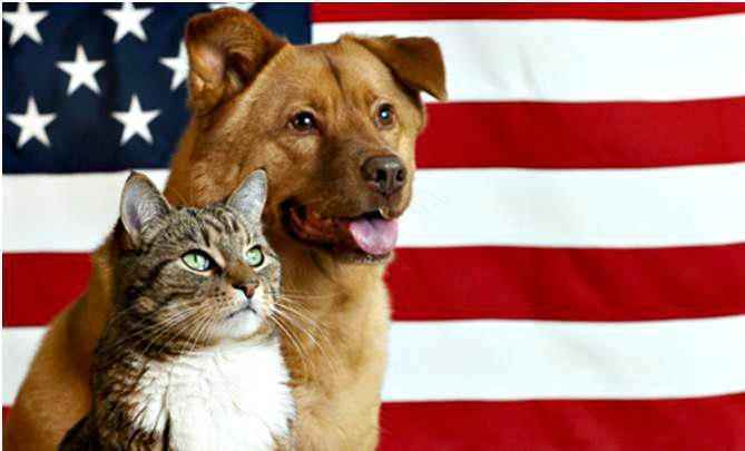 pets and memorial day saftey tips